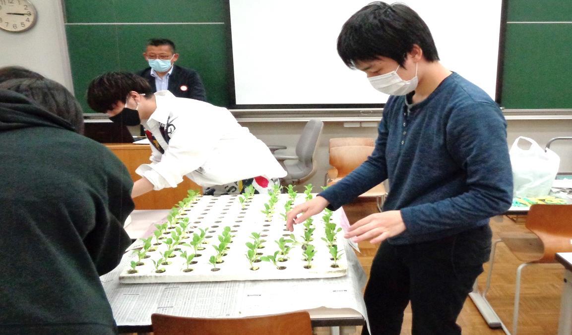 続いて、チンゲンサイを植える作業を体験しています。
